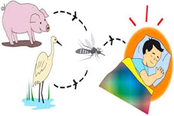 Viêm não Nhật Bản lây qua đường muỗi chích