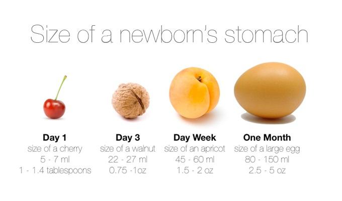 Minh họa kích thước dạ dày trẻ sơ sinh.